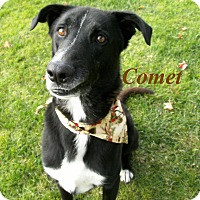Adopt A Pet :: Comet - El Cajon, CA