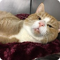Adopt A Pet :: Cortez - Voorhees, NJ