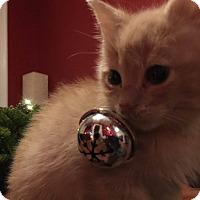 Adopt A Pet :: John Cena - Chicago, IL