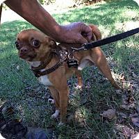 Adopt A Pet :: Kicks - Verona, NJ