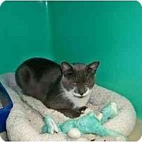 Adopt A Pet :: TD - Secaucus, NJ