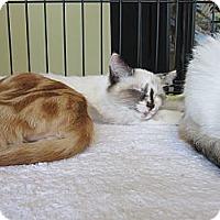 Adopt A Pet :: Chloe & Lola - Easley, SC
