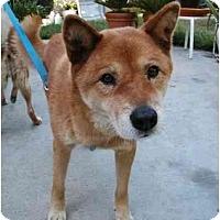 Adopt A Pet :: Jin - Southern California, CA