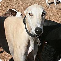Adopt A Pet :: Petie - Santa Rosa, CA