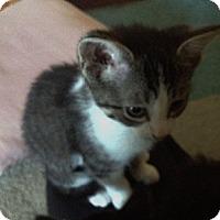 Adopt A Pet :: Bella - Byron Center, MI
