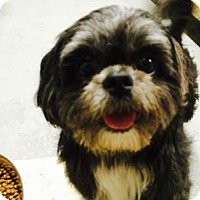 Adopt A Pet :: Tonto - Staunton, VA