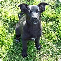 Adopt A Pet :: Miley - Waller, TX