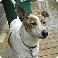 Adopt A Pet :: AWOL - Reduced Fee $300 - Harrisonburg, VA