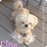Adopt A Pet :: Bordentown NJ - Elise - New Jersey, NJ