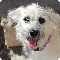 Adopt A Pet :: Mabel - adoption pending - Norwalk, CT