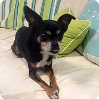 Adopt A Pet :: Mariah - Fennville, MI