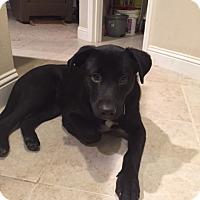 Adopt A Pet :: Blake shelton - Bedford, TX