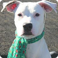 Adopt A Pet :: PEYTON - Clayton, NJ