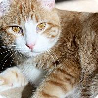 Adopt A Pet :: Sheldon - Hanna City, IL