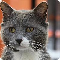 Adopt A Pet :: Foxy - Sarasota, FL