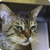 Adopt A Pet :: Brutus - Sarasota, FL