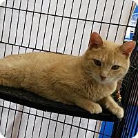 Adopt A Pet :: Sully - Berkeley Hts, NJ