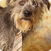 Adopt A Pet :: Dr. Cool - Gilbert, AZ