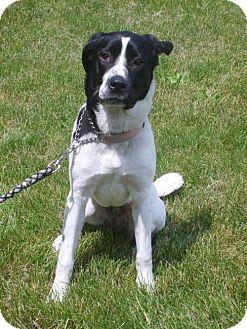 Hound (Unknown Type)/Spaniel (Unknown Type) Mix Dog for adoption in Bellbrook, Ohio - Maddie