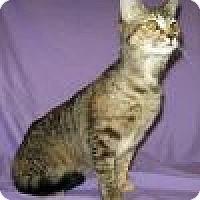 Adopt A Pet :: Else - Powell, OH
