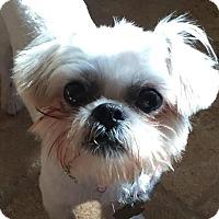 Adopt A Pet :: Kristen Bell - Euless, TX