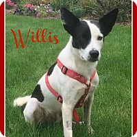 Adopt A Pet :: Willis - Elburn, IL