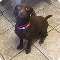Adopt A Pet :: Lucky 5346 - Joplin, MO