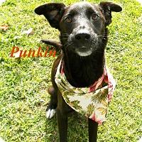 Adopt A Pet :: Punkin - El Cajon, CA