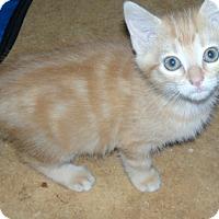 Adopt A Pet :: Carol-$70.00 or 2 for 1 ! - Buford, GA