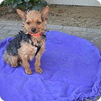 Adopt A Pet :: Raider - Lodi, CA
