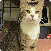 Adopt A Pet :: Padre - Acme, PA