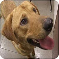 Adopt A Pet :: Brooks - Phoenix, AZ