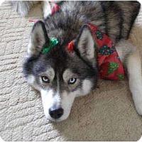 Adopt A Pet :: Phelan - Belleville, MI