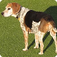 Adopt A Pet :: Tahoe - Meridian, ID