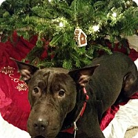Adopt A Pet :: Max - Albemarle, NC