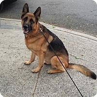 Adopt A Pet :: ZEUS - Tully, NY