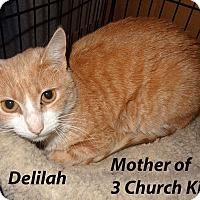 Adopt A Pet :: Delilah - Bentonville, AR