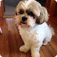 Adopt A Pet :: Travis - Prole, IA