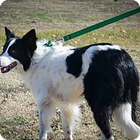 Adopt A Pet :: Merry - Allen, TX