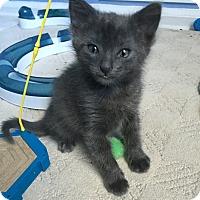 Adopt A Pet :: Sparky - Bayonne, NJ