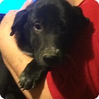 Adopt A Pet :: Blair - Homer, NY