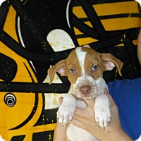 Adopt A Pet :: Gold - Oviedo, FL