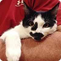 Adopt A Pet :: Jazz - Williamsburg, VA