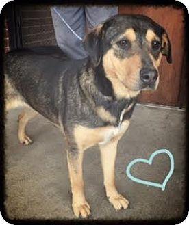 Mountain Cur Mix Dog for adoption in Groton, Massachusetts - Parish
