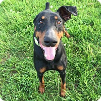 Adopt A Pet :: Winnew - New Richmond, OH