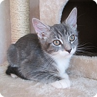 Adopt A Pet :: Rabbit - San Bernardino, CA