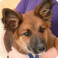 Adopt A Pet :: Violet - Palmdale, CA