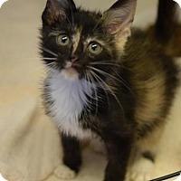 Adopt A Pet :: Roxanne - DFW Metroplex, TX