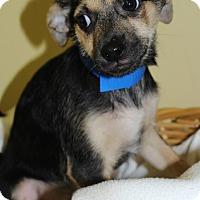 Adopt A Pet :: Faris - Waldorf, MD