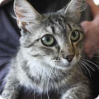 Adopt A Pet :: Kitty - Denver, CO